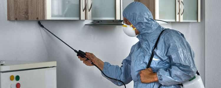 Bes Pest Control Geelong